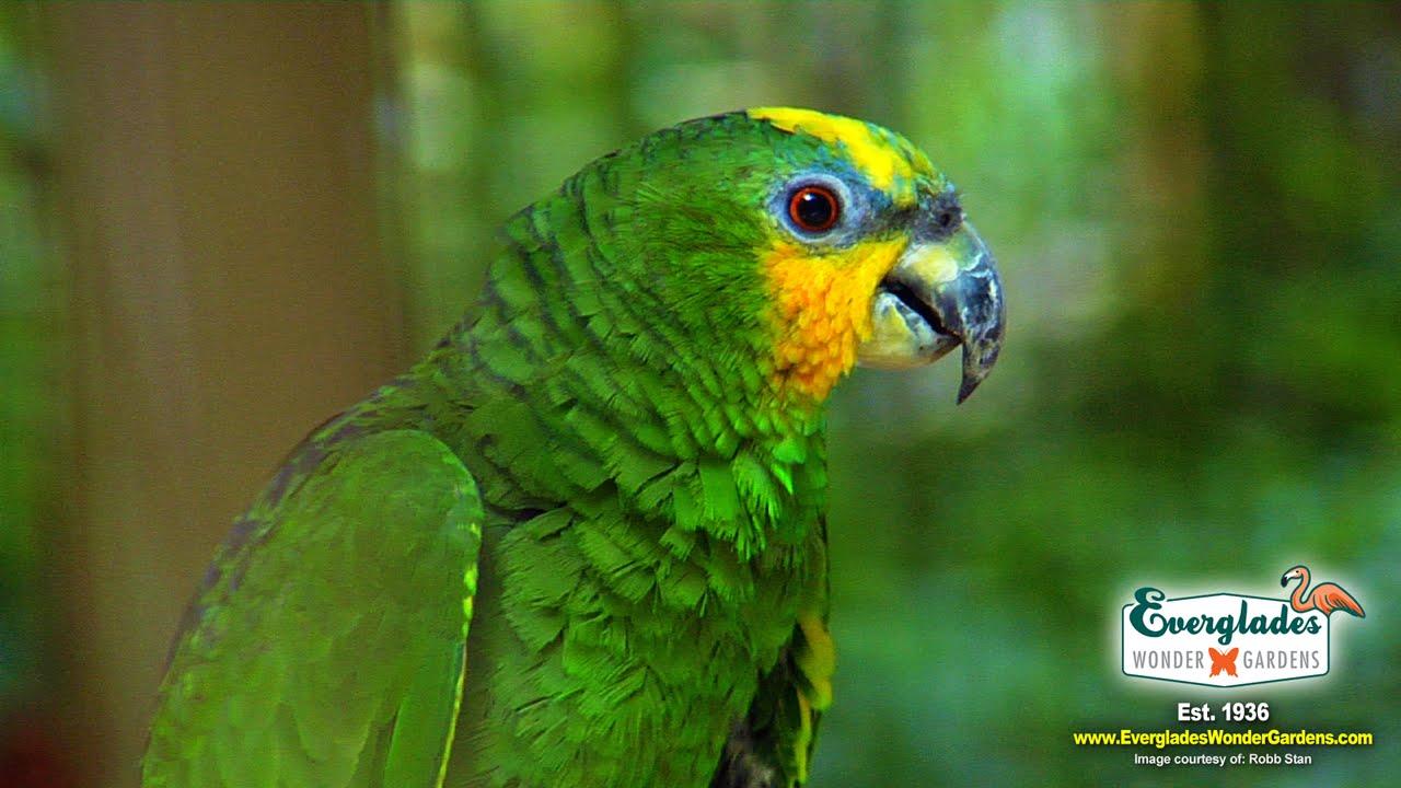 Experience the WONDER of Everglades Wonder Gardens