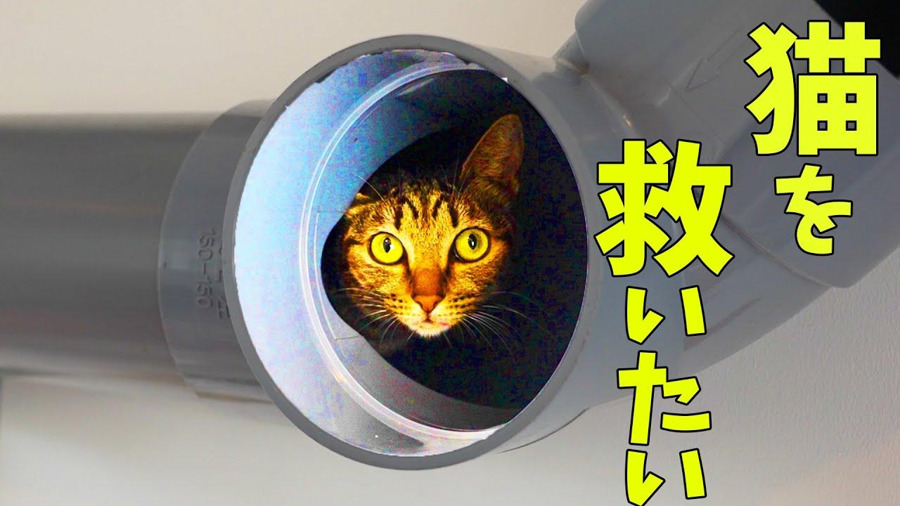 保護猫を救うため動きます【保護猫施設改装 #1】