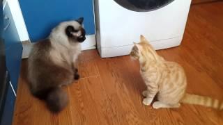 Котенок и старый кот