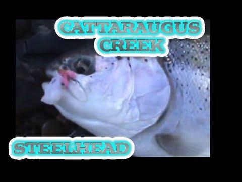 Cattaraugus Steelhead 2012