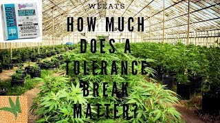 Experiment: How Much Does a Weed Tolerance Break Matter? Hint: A Lot