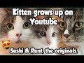 KITTEN SUSHI IS NOW 4 YEARS OLD ! Cute Cat Flashbacks !