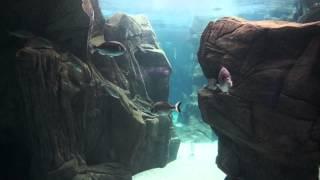 Кусочек водного мира с острова Крит(Это видео снято в CretAquarium - аквариуме, открытом для посещения в районе Гувес, остров Крит. Цена посещения..., 2013-08-07T09:05:05.000Z)