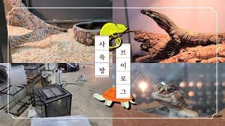 온갖 귀한 파충류들이 가득한 사육방 대청소 Vlog!!
