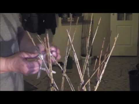How to make a Willow braided belgian tree