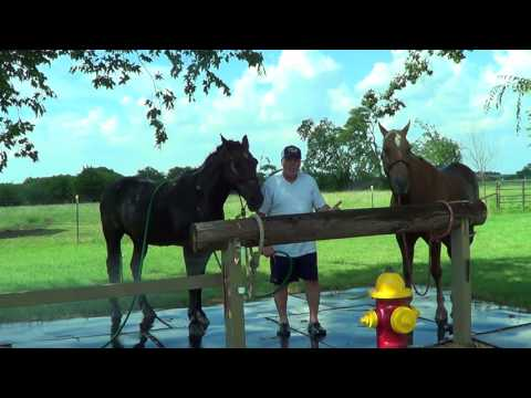 Discussing Horsemen Tips & Horsemanship While Giving The Boys A Cool Down