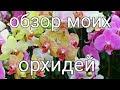 "Стас  Михайлов ""Все  для тебя """