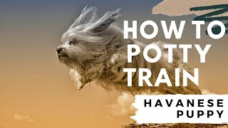 *how To Potty Train Havanese Puppy-*free Mini-course !