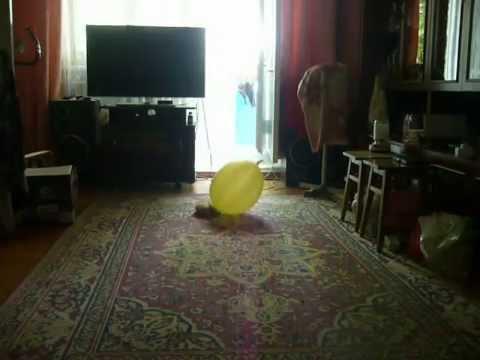 Доставка воздушных шаров с гелием в Санкт Петербурге и ЛО