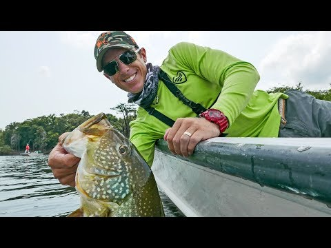 Fishing Jigs on Trees in the Amazon River 4K   Peacock Bass Fishing pt.6