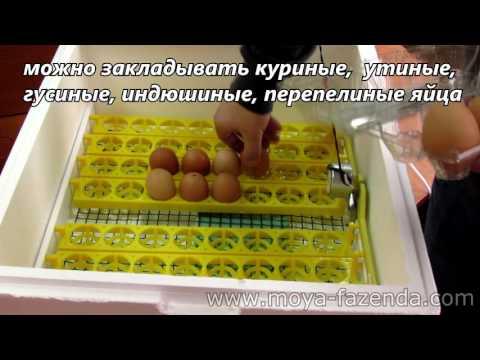 Бытовой инкубатор с автоматическим переворотом яиц и цифровым терморегулятором