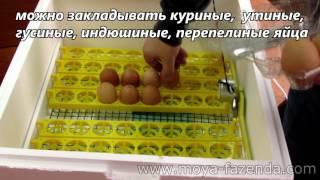 Побутовий інкубатор з автоматичним переворотом яєць і цифровим терморегулятором