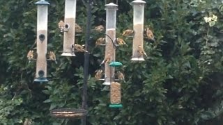 Busy Uk Garden Bird Feeders (2015) (british Birds)