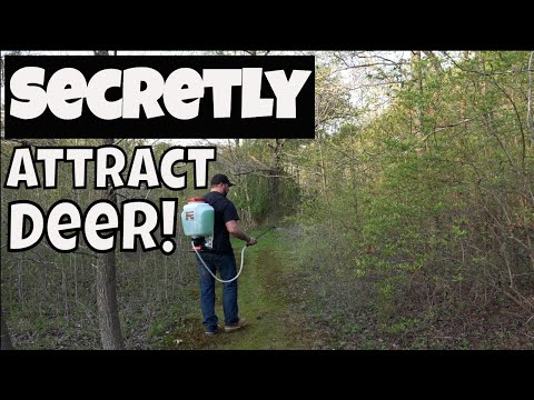 Learn How To Attract Deer To Small Properties Fast!