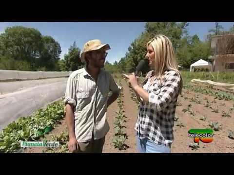 Pianeta Verde: Villaggio Verde, ortaggi e frutti di bosco biologici a Cavallirio (NO) - 29.05.2017