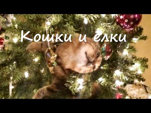 Кошки и ёлки. Коты против новогодних ёлок. Как их защитить друг от друга.