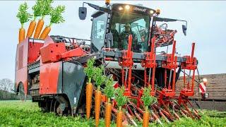 World Ingenious Harvesting Technology - how to harvest carrots - Harvesting & Farming carrots