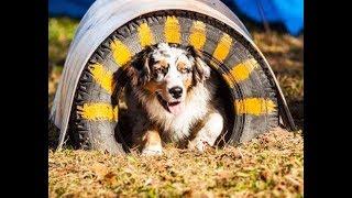 DIY для собак. Тоннель для аджилити.