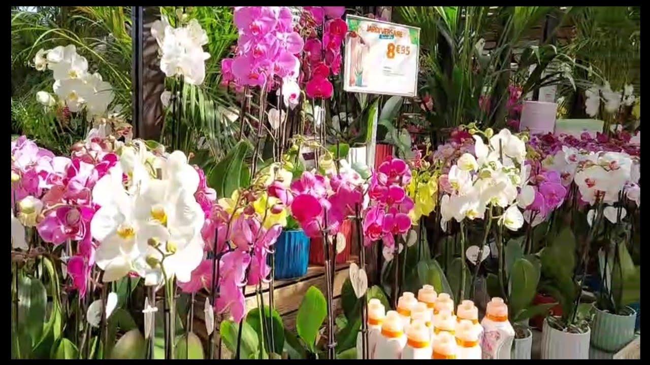 พ่อใหญ่พาชมร้านขายต้นไม้ดอกไม้สวยๆ#