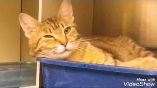 Cat Adoption Room Walk Thru 7-25-17