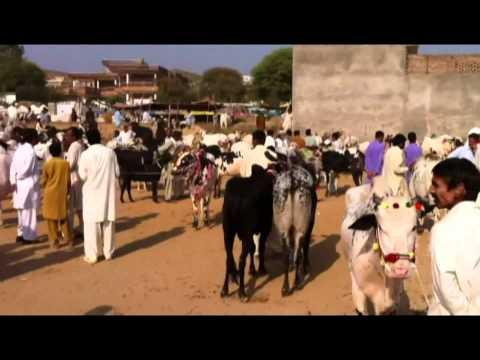 Dadyal Mandi Ahead of Qurbani Eid
