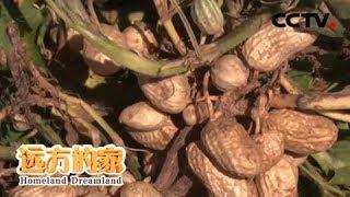 《远方的家》 20200102 一带一路(528) 塞内加尔 塞内加尔:花生之国| CCTV中文国际