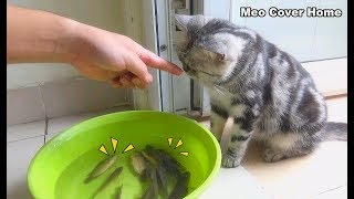Funny Cat Play With Fish So Cute | Funny Cat vs Fish | Meo Cover Home
