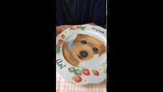 【犬のトールペイント レッスン】 トールペイントで、ノーフォークテリ...