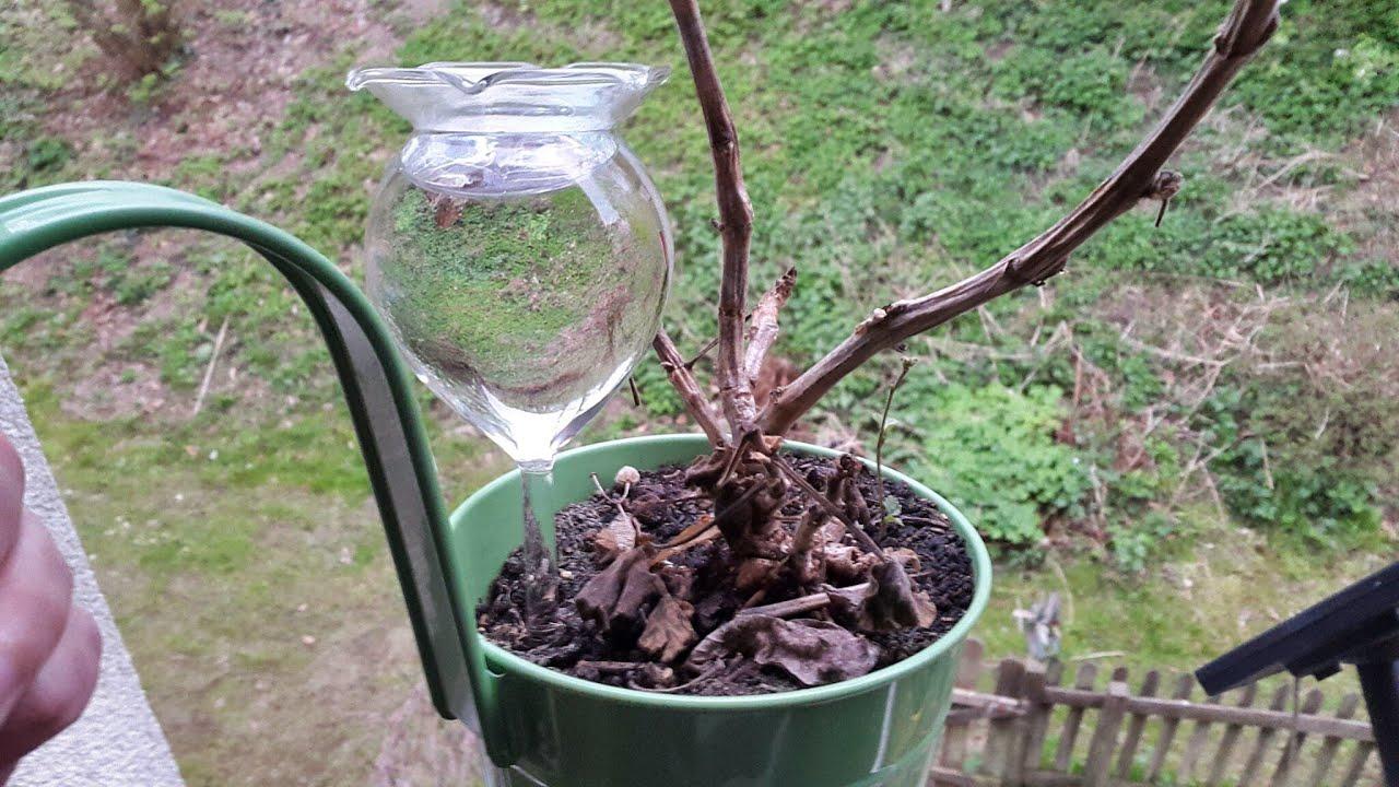 bew sserunsghilfen zur langzeitbew sserung von zimmerpflanzen und balkon watering aids popierk