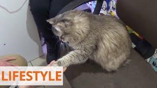 Украинцы открыли музей кошек в Кракове
