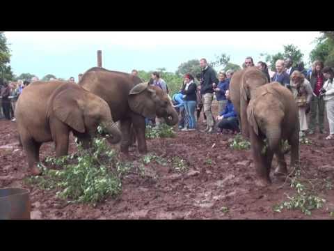 "Baby elephants in ""Elephant Orphanage"" in Nairobi, Kenya."