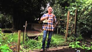 The Garlic Guide: Preparing your soil; and planting garlic