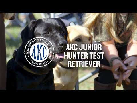 AKC Junior Hunter Test For Retrievers | Intro To Dog Sports