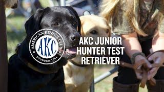 AKC Junior Hunter Test for Retrievers   Intro to Dog Sports