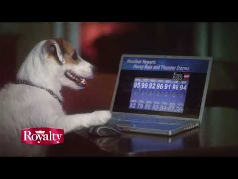 Jesse the Dog: 'Scary Experience 2.' GAF Commercial, with Royalty Roofing