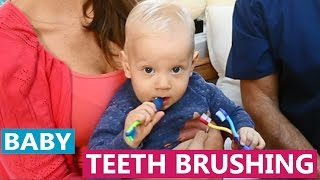 When to start brushing your baby's teeth | Dentist Tips