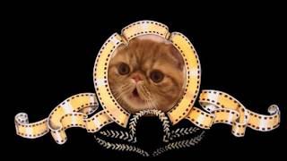Кот экзот Кузя говорит кря и наносит ответный удар