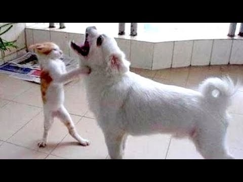 Thumbnail: Be careful! YOUR JAW WILL HURT FROM LAUGING - Ultra FUNNY ANIMAL compilation