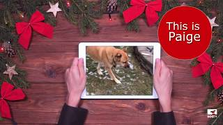 Meet Paige - DOGTV Giving Tuesday Campaign - Dogs on Deployment