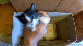Котята впервые пробуют молоко из мисочки