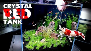 Aquascape Tutorial: CRYSTAL RED SHRIMP Nano Cube (How To: Planted Aquarium Step By Step Setup)