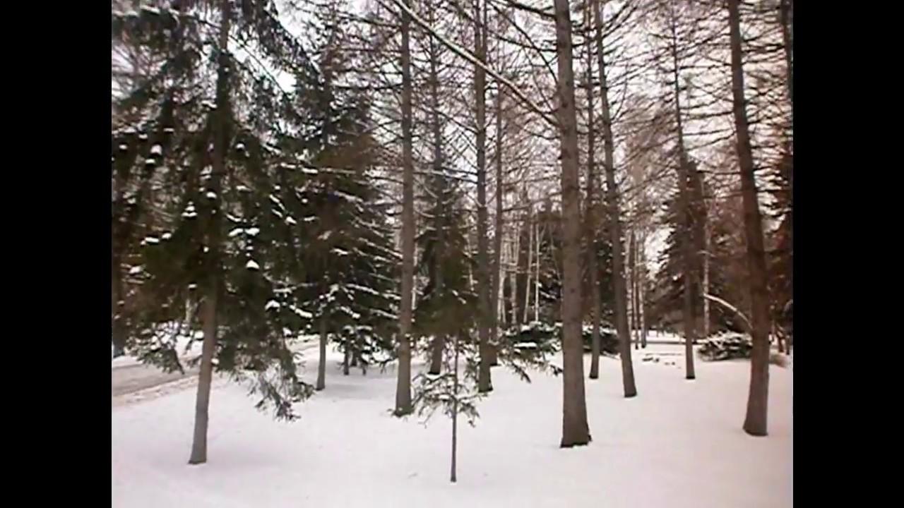 фото природа новосибирска