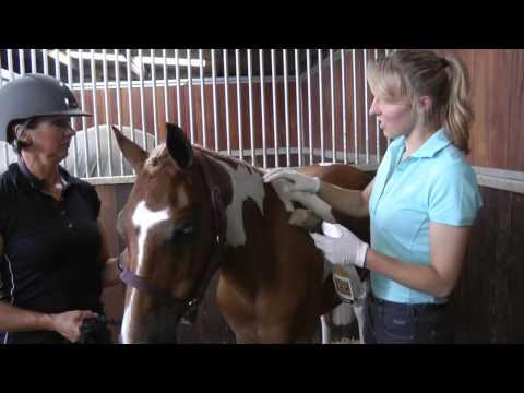 How to do equine makeup & quarter-marks for showing --PONY Mag
