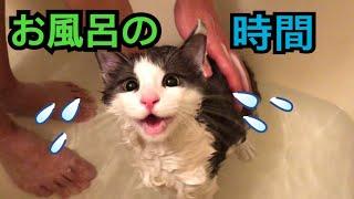長毛猫ちゃんにお風呂は必須だと聞いたので、 定期的にお風呂に入れてい...