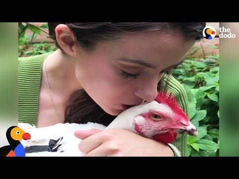 Thumbnail: Rescued Chicken Loves Dog Siblings | The Dodo
