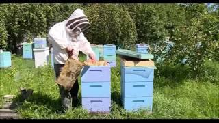 видео Итог пчеловодного сезона 2015