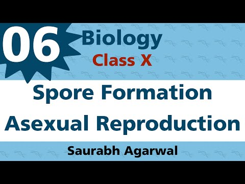 Spore Formation A type of Asexual Reproduction Class X Biology