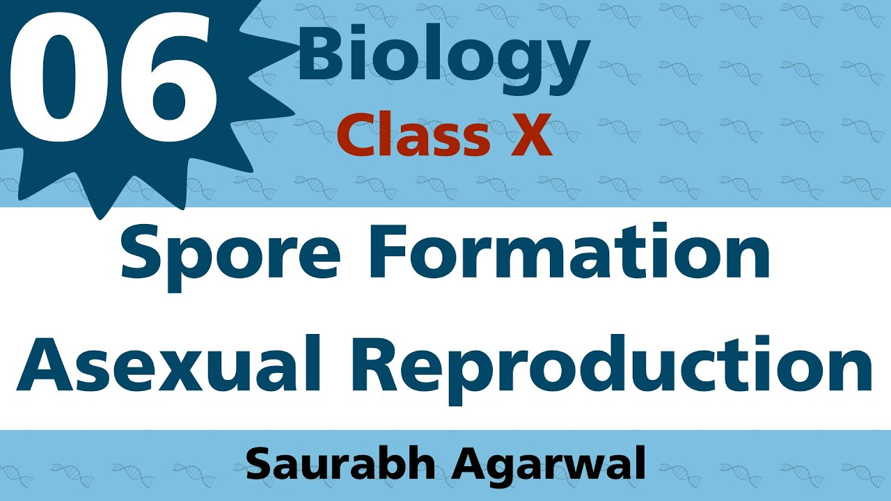 Regeneration form asexual reproduction in fungi