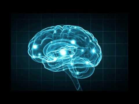 Blood supply to the brain/ part 1/ vertebrobasilar system