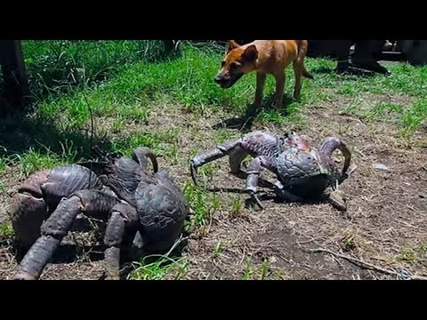 5 Scary Things Caught by a Dog!